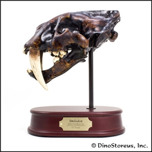 "Smilodon "" Sabertooth Cat"" Skull Model"