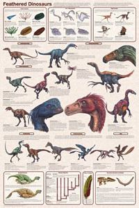 Feathered Dinosaurs Poster (Laminated)