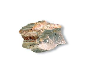 Petrified Wood - rocks for sale - buy rocks