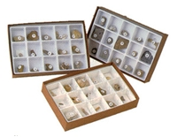 Cenozoic Fossils Collection, Fossil Collection, Mammal Fossils, Fossils, Mammal Fossil Collection