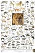 Carnivores of Africa - Laminated