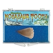 Real Dinosaur Fossil Mosasaur Tooth Educational Box