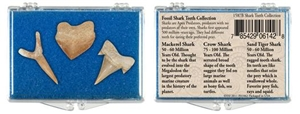 Fossil Shark Teeth Set of 3
