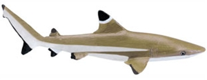 Wild Safari® Sealife Blacktip Reef Shark
