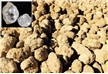 Classroom Bulk Pack - 200 Break Open Whole Moroccan Geodes 2""