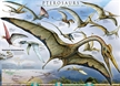 Pterosaurs Flying Reptiles Poster - Laminated Rolled and Sleeved