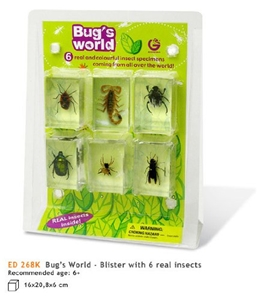 Geoworld Bug's World - Blister 6 Real insects