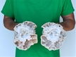 "Set of 6"" Saw Cut Geode Halves 