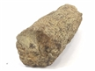 "Lycopod Tree Root Fossil 7"" Long"