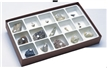 Paleozoic Fossils Sience Collection