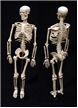 Human Skeleton Model 34 inches, small human skeleton replica, science supplies, human body skeleton