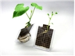 Seed Germination Kit, grow seeds with solar power, kids gardening toy and science kits