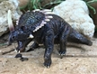 Collect A Styracosaurus Dinosaur Model Toy