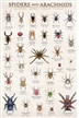 Spiders and Arachnids Poster
