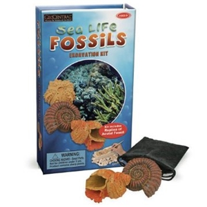 Sea Life Fossil Excavation Kit