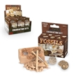 Fossils Excavation Dig Kit