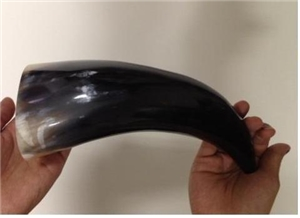 Authentic Polished Indian Water Buffalo Horn - 8""