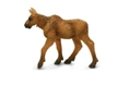 Safari Moose Calf Toy Model