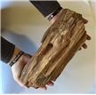 Large Petrified Fossilized Tree Wood Log 14.4 lbs - Display Decor Piece
