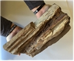 Large Petrified Fossilized Tree Wood Log 12 lbs - Display Decor Piece