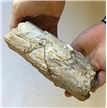 Large Petrified Fossilized Tree Wood Log 3.3 lbs -Display Decor Piece