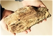 Petrified Wood Large Fossilized Log 4.55 lbs