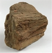 Petrified Wood Fossilized Tree Log 15.4 lbs Texas | 10 in. x 8 in.