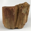 Petrified Wood Fossilized Tree Log 9.9 lbs Texas | 6 in. x 7.25 in.