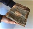 Large Petrified Fossilized Tree Wood Log  5.55 lbs - Display Decor Piece