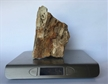 Petrified Wood Fossilized Tree Log 3.8 lbs Texas | 6.5 in. x 4 in.