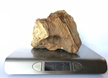 Petrified Wood Fossilized Tree Log 4.3 lbs Texas | 5 in. x 6 in.
