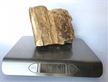 Petrified Wood Fossilized Tree Log 4.6 lbs Texas | 5 in. x 5 in.