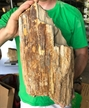 Petrified Wood Fossilized Tree Log 20.7 lbs Texas | 15  in. x 7.5 in.