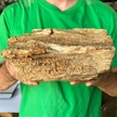 Petrified Wood Fossilized Tree Log 9.7 lbs Texas | 9  in. x 5 in.