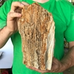 Petrified Wood Fossilized Tree Log 7.6 lbs Texas | 9.5  in. x 4.5 in.