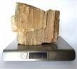 Petrified Wood Fossilized Tree Log 6.3 lbs Texas | 6 in. x 7 in.