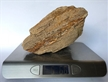Petrified Wood Fossilized Tree Log 5.6 lbs Texas | 8 in. x 4 in.