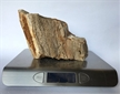 Petrified Wood Fossilized Tree Log 5.4 lbs Texas | 4 in. x 5.5 in.