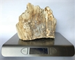Petrified Wood Fossilized Tree Log 5.3 lbs Texas | 5.5 in. x 6.5 in.