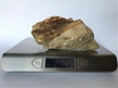 Petrified Wood Fossilized Tree Log 2.11 lbs Texas | 5 in. x 4 in.
