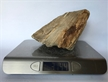 Petrified Wood Fossilized Tree Log 3.1 lbs Texas | 6 in. x 5 in.