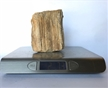 Petrified Wood Fossilized Tree Log 2.6 lbs Texas | 4.5 in. x 4 in.