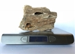 Petrified Wood Fossilized Tree Log 2.1 lbs Texas | 5 in. x 3 in.