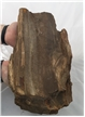 Large Petrified Fossilized Tree Wood Log 14.5 lbs - Display Decor Piece