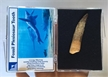 Authentic Fossilized Plesiosaur Tooth - Boxed