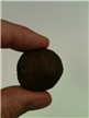 Authentic Fossil Echinod Rough Brown
