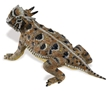 Incredible Creatures Horned  Lizard Toy Model