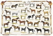 Horses and Ponies Educational Poster, horses poster, horse poster, educational poster, pony poster