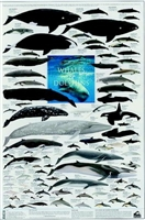 whale poster, dolphin poster, whale and dolphin poster, mammals of the ocean poster, mammals of the