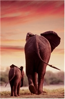 elephant poster, elephant and baby poster, safari poster, elephants poster, elephant and calf poster